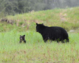 Mom and cub, Jeff - August 2013