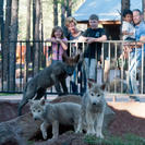 Photo of Grand Canyon National Park Bearizona Drive-Thru Wildlife Park Bearizona