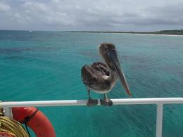 This bird comes up to the catamaran and apparently is very friendly with the crew, they even gave it a name and quot;charlie and quot; , Daniel C - July 2012