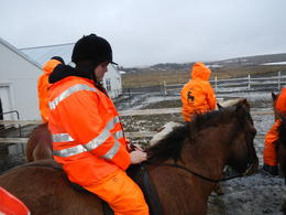 Photo of Reykjavik Viking Horse-Riding Tour and Blue Lagoon from Reykjavik DSCN0256
