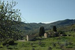Photo of Florence Chianti Region Wine Tasting Half-Day Trip from Florence Olive trees