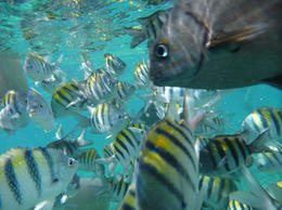 Great underwater shot, while snorkeling with my boys. , Alex Argueta - December 2010