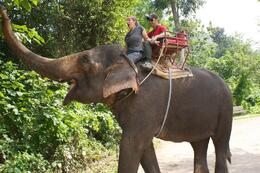 Photo of Bangkok Khao Yai National Park and Elephant Ride Day Trip from Bangkok Ahhh!!