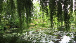 Enjoyed the sight of water lillies and other collection of flowers , Ketan P - July 2013