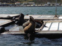 Photo of San Diego San Diego Seal Tour Sea Lions