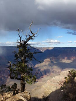 Photo of Las Vegas Grand Canyon South Rim Bus Tour with Optional Upgrades A little perspective