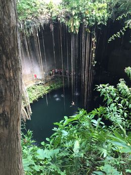 The view from above the Cenote. So cool! , jaclynjacobs - April 2016