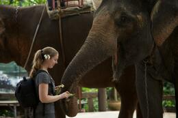 Photo of Bangkok Khao Yai National Park and Elephant Ride Day Trip from Bangkok Tipping with Bananas