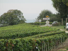 Vineyards just post harvest in Mutigny , Judy M - October 2012
