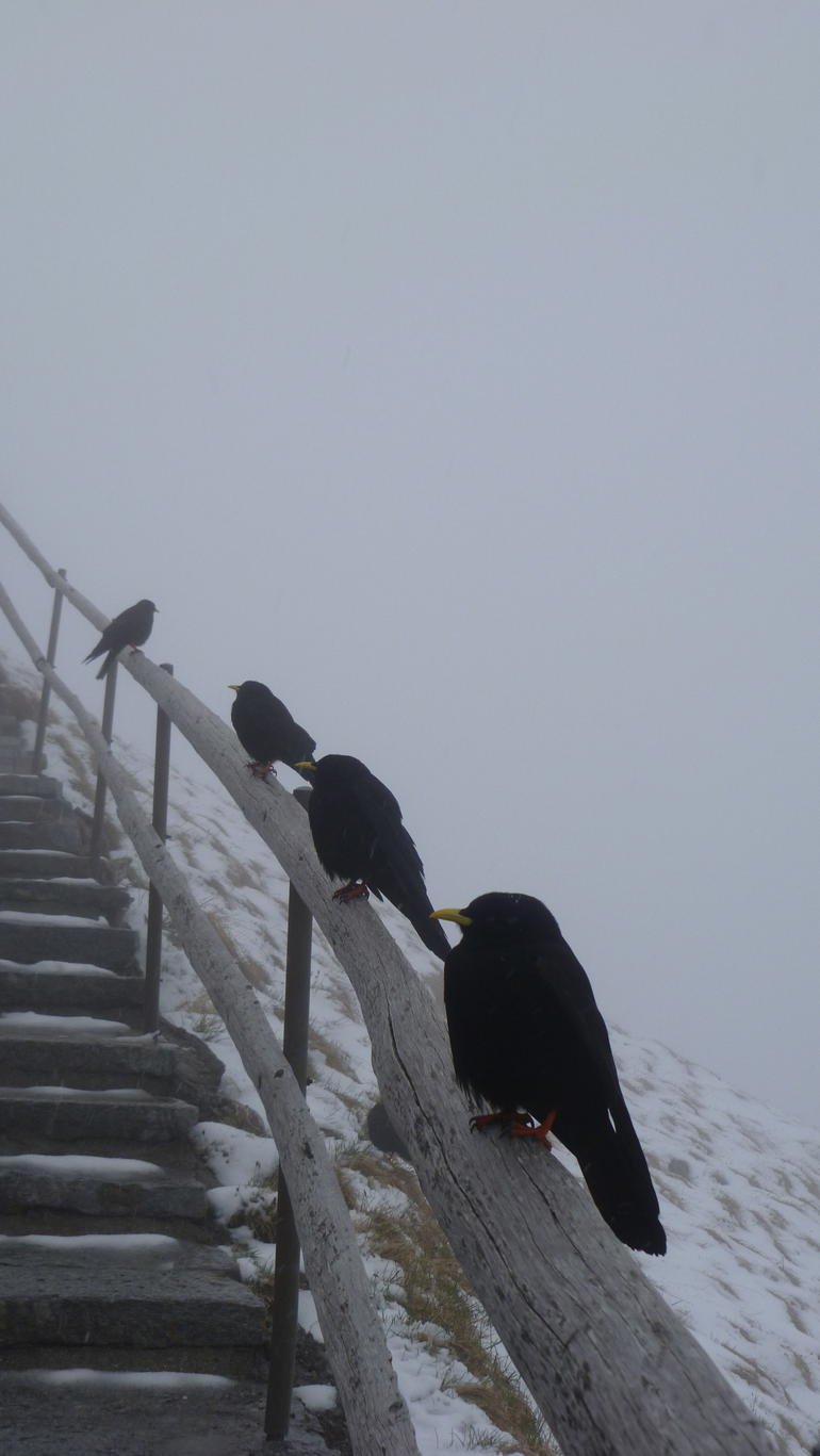 Companions at the summit - Lucerne