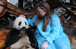Photo of Chengdu Viator Exclusive: Volunteer at Panda Breeding Center with Optional Panda Holding Just an amazing experience