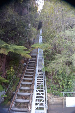 Photo of Sydney Blue Mountains Nature and Wildlife Day Tour from Sydney Scenic Railway