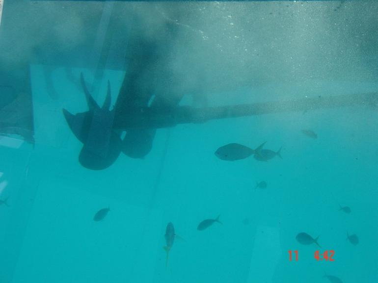View from the submersible - Cairns & the Tropical North