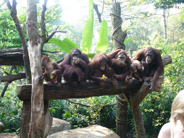 Breakfast at Singapore Zoo - Singapore