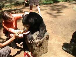 You also will get an opportunity to feed a sun bear honey at Deer Park - lovely experience!!!, Andrew S - October 2010