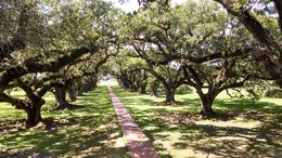 Photo of New Orleans Tour of Oak Alley Plantation The beautiful walkway at Oak Alley Plantation.