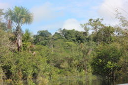 View of the Amazon forest., peter - May 2013