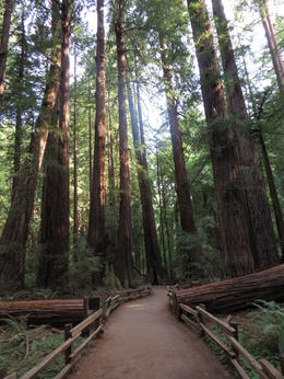 Photo of San Francisco San Francisco Super Saver: Muir Woods and Wine Country Tour The Beauty of Nature