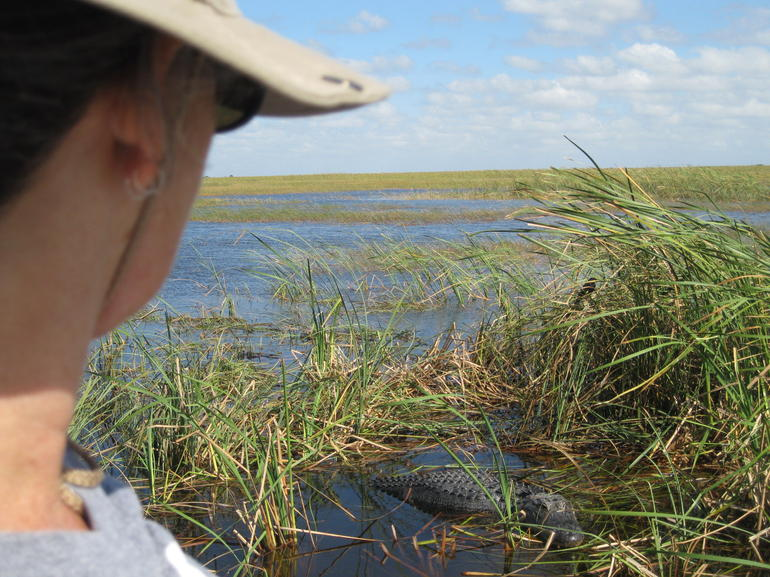 Checking out a big gator - Everglades National Park