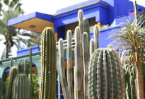 Photo of Marrakech Majorelle Garden (Jardin Majorelle)