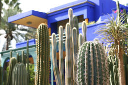 Photo of   Majorelle Garden, Marrakech