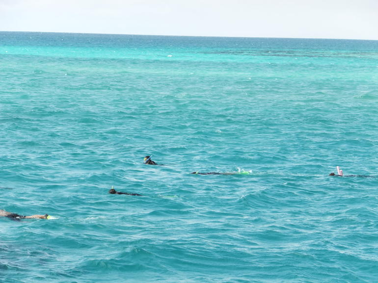 An absolutely amazing and fun time snorkeling at the Barrier Reef. I would do this again!
