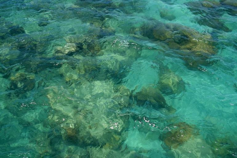 The corals in the wind - Cairns & the Tropical North