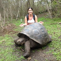 Giant tortoise visit on Florena Island , Cheryl W - December 2013