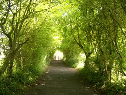 Photo of Dublin Limerick, Cliffs of Moher, Burren and Galway Bay Rail Tour from Dublin Tree covered trail