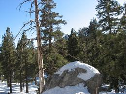 Photo of Palm Springs Palm Springs Aerial Tramway Along the trail at San Jacinto