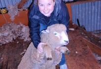 Photo of Christchurch Christchurch Sheep Farm Visit