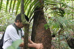 Finding a red ants nest and rubbing them into your skin helps camouflage your smell from larger animals (like pumas)., peter - May 2013