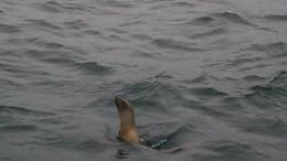 Photo of San Francisco Whale Watching & Wildlife Eco Tour from San Francisco Sea Lion
