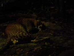 Photo of Singapore Singapore Zoo Night Safari Tour with optional Buffet Dinner Sleeping beauty