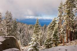 Photo of   Snow on the trees in Lake Tahoe