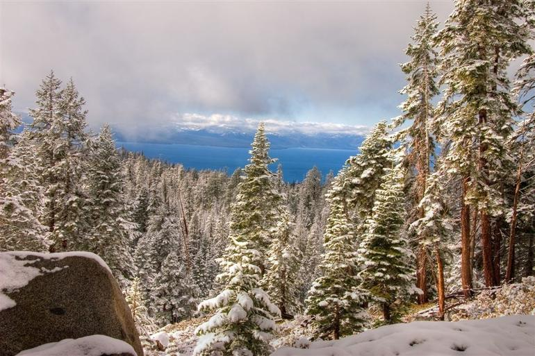 Snow on the trees in Lake Tahoe - Lake Tahoe