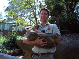 Photo of Sydney Sydney Taronga Zoo General Entry Ticket and Wild Australia Experience Wombat