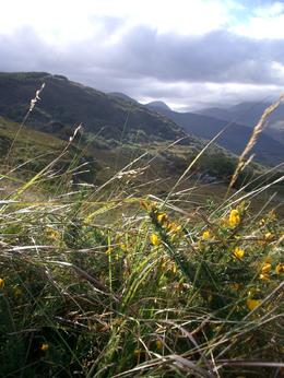 Photo of Killarney Full Day Tour of The Ring of Kerry Beautiful Scenery