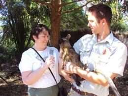 Photo of Sydney Sydney Taronga Zoo General Entry Ticket and Wild Australia Experience Fun with a kangaroo