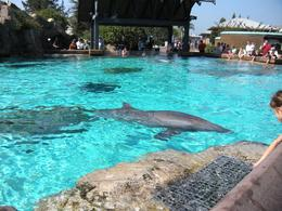 Group of dolphins swimming - October 2009