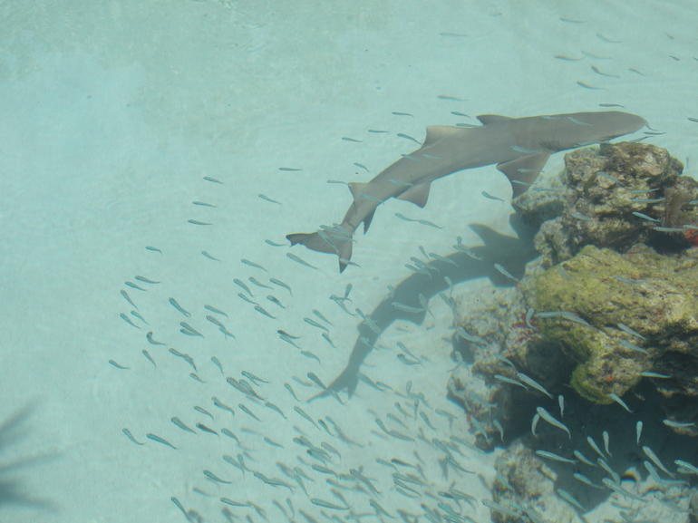 More sharks - St Thomas