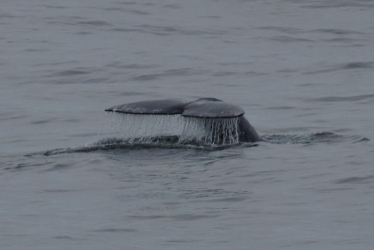 Tale of a Grey Whale - San Diego