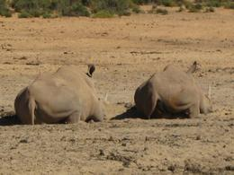 Photo of Cape Town Aquila Game Reserve Wildlife Safari from Cape Town Two rhinoceres resting side by side after a hard day