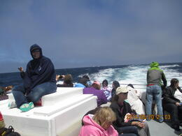 Photo of San Francisco Whale Watching & Wildlife Eco Tour from San Francisco Wahle Tour