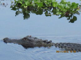 Photo of New Orleans Swamp and Bayou Sightseeing Tour with Boat Ride from New Orleans New Orleans 2012 112