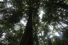 View of the forest canopy., peter - May 2013