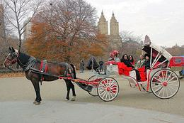 Photo of New York City Private Horse and Carriage Ride in Central Park Our Horse and Buggy Ride through Central Park