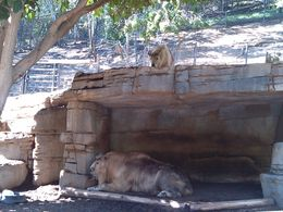 Photo of San Diego San Diego Zoo another day in paradise