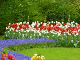 Photo of Amsterdam Keukenhof Gardens and Tulip Fields Tour from Amsterdam Frühling