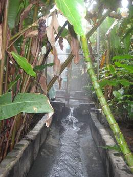 Photo of San Jose Arenal Volcano and Hot Springs Day Trip from San Jose Hot